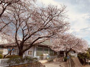 4月3日 桜の開花情報